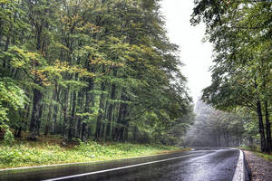 autumn road by lucifersdream