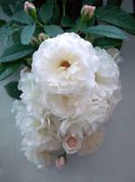 bridal bouquet by Mariska1974