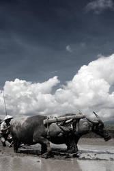bulls rider by iwans