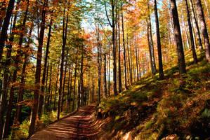 Autumn by LastOfThePlagues