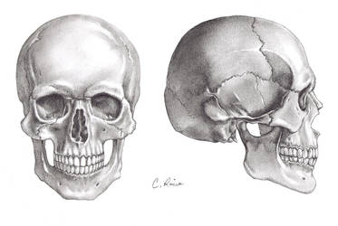 The Skulls by Carminasimdesigner