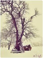 winter by MisticSoul