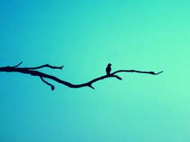 Bird --revamp-- by asheeolee