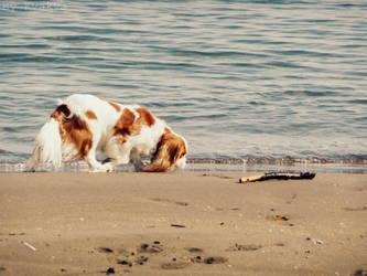My Dog by Kva-Kva