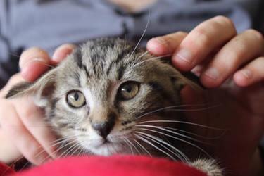 Happy : Kitten by Ludo61