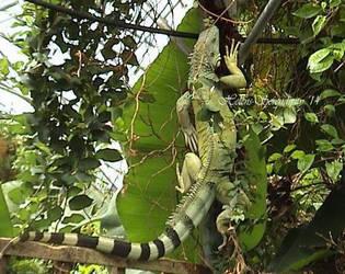 Lizard... by Helens-Serendipity