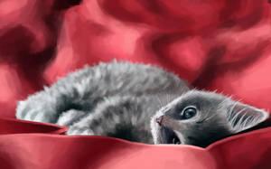 Kitten by willroberts04