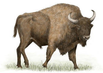 Bison priscus, Steppe bison by Pachyornis