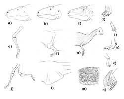 Some common paleoart mistakes by Pachyornis