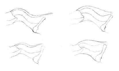 Theropod necks: S-shaped or horse neck? by Pachyornis