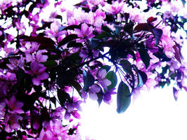 Peaceful Flowers by vVvCrashinvVv