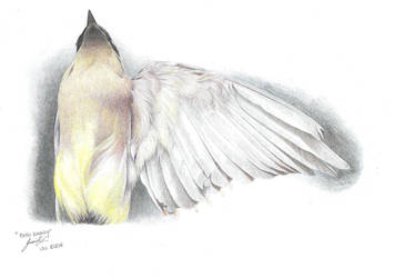 Waxwing - Colored by jadefalcon
