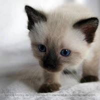 Cute Small Nose by darkcalypso