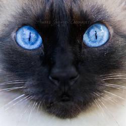 Blue Exorcist by darkcalypso