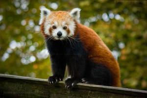 Firefox Staring Into Your Soul by darkcalypso