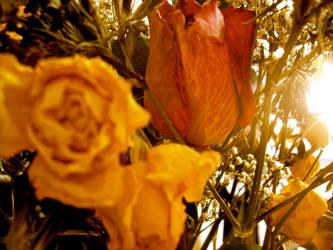 Flowers in the Sun by rubberduck354