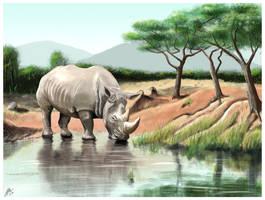 White Rhino by wildpaintings