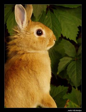 Bunny by Henriksen