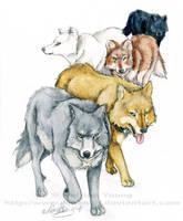 Wolf's Rain by RohanElf