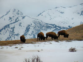 More Buffalos,More Mountains by SBricker