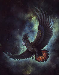Starry Flight by Kanizo