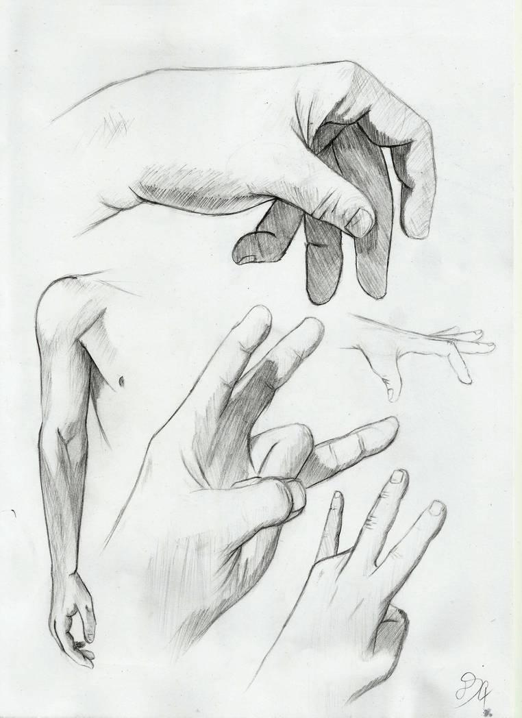 Hand Anatomy Studies By Dsc The Artist On Deviantart