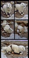 Tikaani ' The hunter of the tundra' by LisaToms