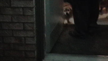 My Dog by coldsteeldragon