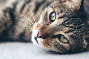 cat. by Blueberryblack