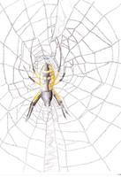 Web of Words by Talon-Ofoalain
