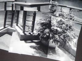 Potted Plant by Talon-Ofoalain