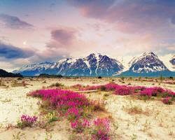 Alaska II by Boomagoo