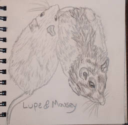 LupeMouseyDrawing 01 by Peromyscus