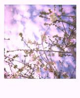 the seasons- part deux by LuNaR-fLooD