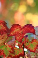 Happy fall2 by MDDahl