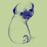 Pug by PRESS-CAPS-LOCK