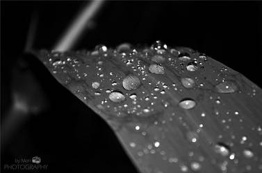 after rain by ByMon122