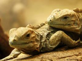 reptiles by Briandesign