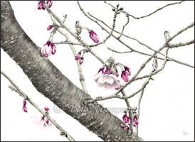 April Blossoms by bjt