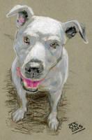 regularwhitedude dog cash pastels XLG by jetdog-art