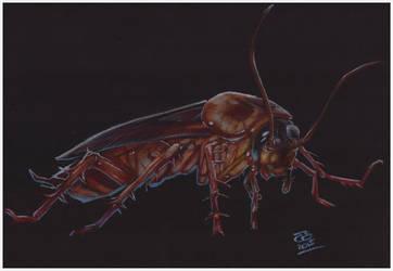 Day 113 The Cockroach by jetdog-art