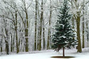 Lone tree by PhotoDragonBird