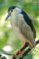 Hi! I am heron! by PhotoDragonBird