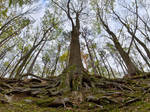 Roots by PhotoDragonBird