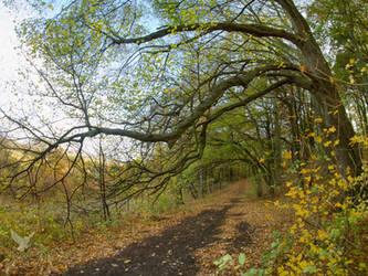 Forest path by PhotoDragonBird