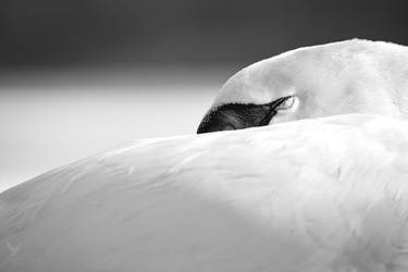 Sleep by PhotoDragonBird
