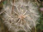 seed 2 by nikita-stock