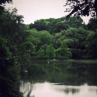 central park by friday-forever