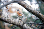 Bird 3 by KilCillian