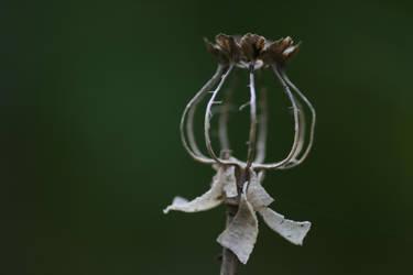 Poppy seedhead final breakdown by langeboom
